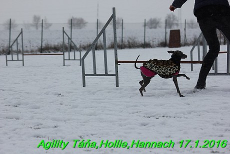 Agility Tana, Hollie,Hannach 17.1.2016 (39)