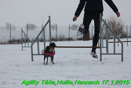 Agility Tana, Hollie,Hannach 17.1.2016 (40)