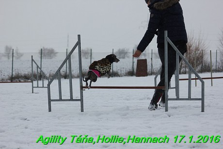 Agility Tana, Hollie,Hannach 17.1.2016 (41)