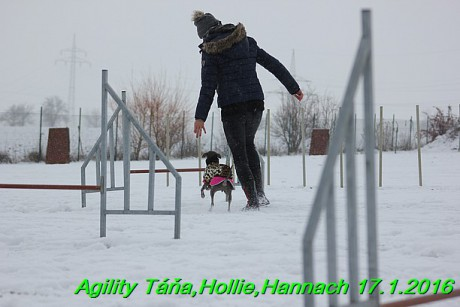Agility Tana, Hollie,Hannach 17.1.2016 (42)