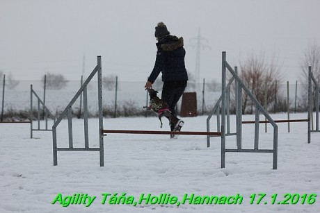 Agility Tana, Hollie,Hannach 17.1.2016 (43)