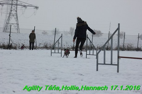 Agility Tana, Hollie,Hannach 17.1.2016 (45)