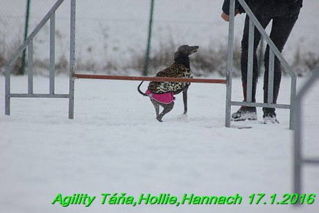 Agility Tana, Hollie,Hannach 17.1.2016 (46)