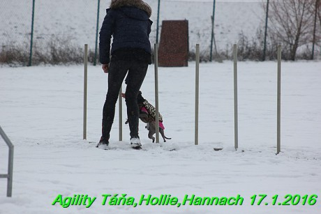Agility Tana, Hollie,Hannach 17.1.2016 (47)