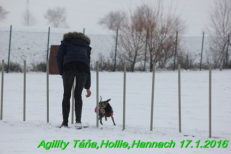 Agility Tana, Hollie,Hannach 17.1.2016 (48)