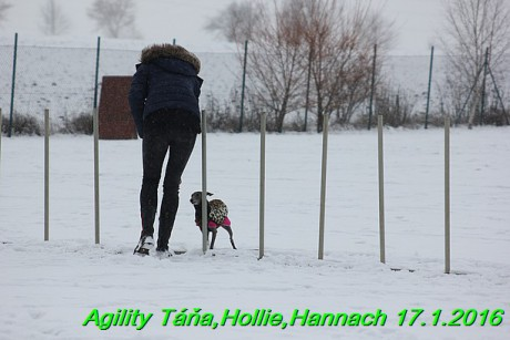 Agility Tana, Hollie,Hannach 17.1.2016 (49)