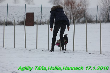 Agility Tana, Hollie,Hannach 17.1.2016 (50)