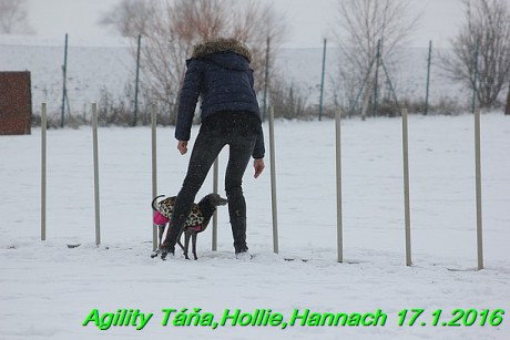Agility Tana, Hollie,Hannach 17.1.2016 (51)