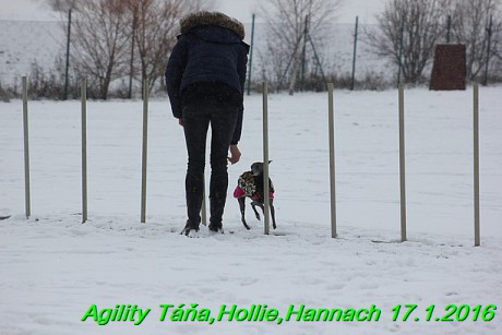 Agility Tana, Hollie,Hannach 17.1.2016 (52)