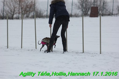 Agility Tana, Hollie,Hannach 17.1.2016 (53)