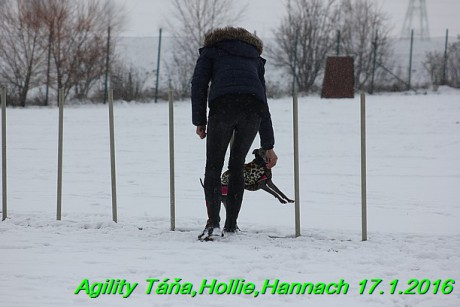 Agility Tana, Hollie,Hannach 17.1.2016 (54)