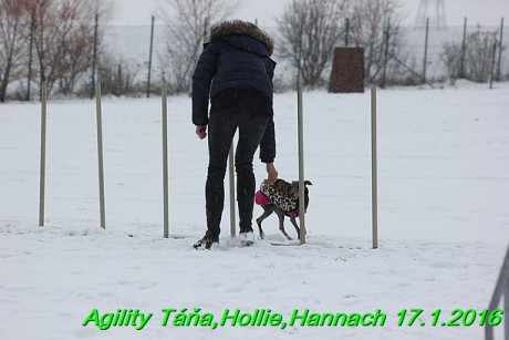 Agility Tana, Hollie,Hannach 17.1.2016 (55)