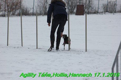 Agility Tana, Hollie,Hannach 17.1.2016 (56)