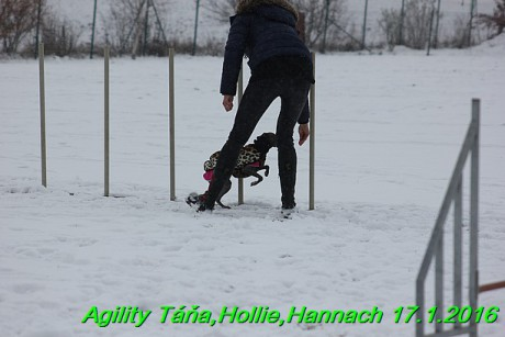 Agility Tana, Hollie,Hannach 17.1.2016 (57)