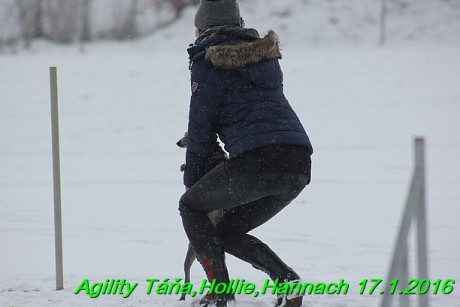Agility Tana, Hollie,Hannach 17.1.2016 (59)