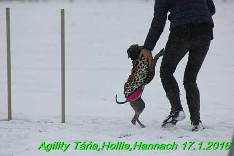 Agility Tana, Hollie,Hannach 17.1.2016 (60)