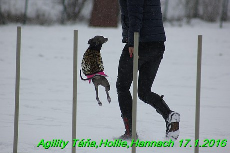 Agility Tana, Hollie,Hannach 17.1.2016 (61)