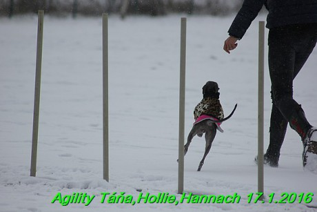 Agility Tana, Hollie,Hannach 17.1.2016 (62)
