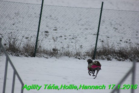 Agility Tana, Hollie,Hannach 17.1.2016 (63)