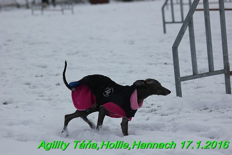 Agility Tana, Hollie,Hannach 17.1.2016 (64)