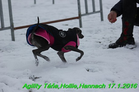 Agility Tana, Hollie,Hannach 17.1.2016 (65)