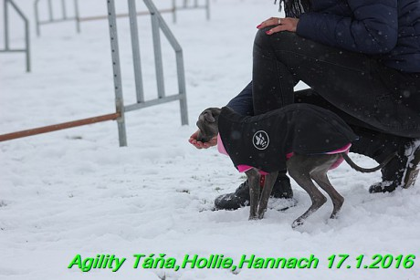 Agility Tana, Hollie,Hannach 17.1.2016 (66)