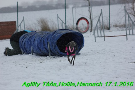 Agility Tana, Hollie,Hannach 17.1.2016 (67)