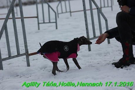 Agility Tana, Hollie,Hannach 17.1.2016 (69)