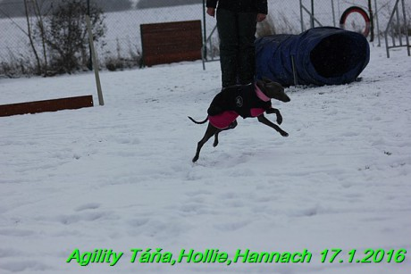 Agility Tana, Hollie,Hannach 17.1.2016 (70)