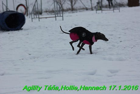 Agility Tana, Hollie,Hannach 17.1.2016 (71)