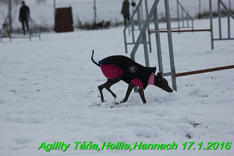 Agility Tana, Hollie,Hannach 17.1.2016 (72)