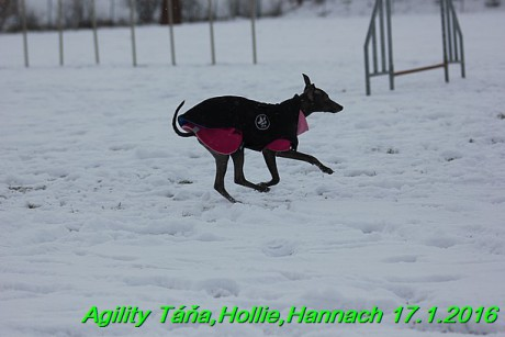 Agility Tana, Hollie,Hannach 17.1.2016 (73)
