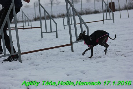 Agility Tana, Hollie,Hannach 17.1.2016 (74)