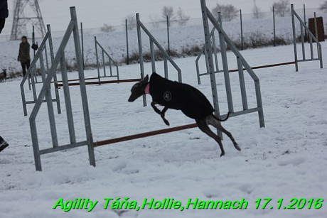 Agility Tana, Hollie,Hannach 17.1.2016 (75)