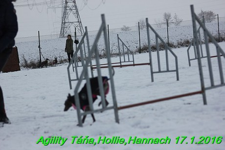 Agility Tana, Hollie,Hannach 17.1.2016 (76)