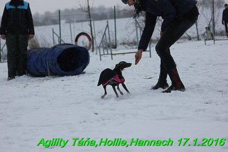 Agility Tana, Hollie,Hannach 17.1.2016 (77)