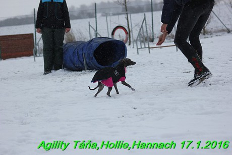Agility Tana, Hollie,Hannach 17.1.2016 (78)