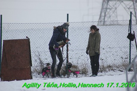 Agility Tana, Hollie,Hannach 17.1.2016 (79)