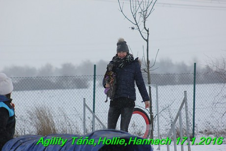 Agility Tana, Hollie,Hannach 17.1.2016 (80)