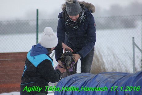 Agility Tana, Hollie,Hannach 17.1.2016 (81)