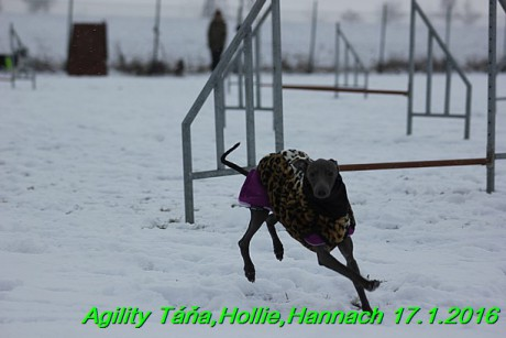 Agility Tana, Hollie,Hannach 17.1.2016 (82)