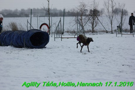 Agility Tana, Hollie,Hannach 17.1.2016 (83)