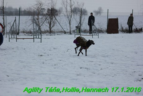 Agility Tana, Hollie,Hannach 17.1.2016 (84)