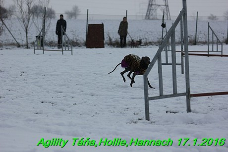 Agility Tana, Hollie,Hannach 17.1.2016 (85)
