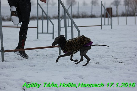 Agility Tana, Hollie,Hannach 17.1.2016 (86)