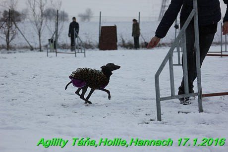Agility Tana, Hollie,Hannach 17.1.2016 (87)