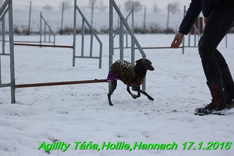 Agility Tana, Hollie,Hannach 17.1.2016 (88)