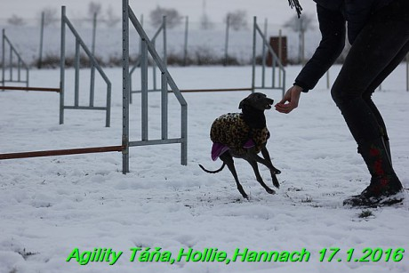 Agility Tana, Hollie,Hannach 17.1.2016 (89)