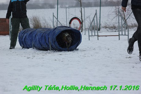 Agility Tana, Hollie,Hannach 17.1.2016 (90)