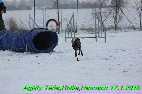 Agility Tana, Hollie,Hannach 17.1.2016 (91)